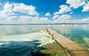 Algae_lakeshore_path08_7500