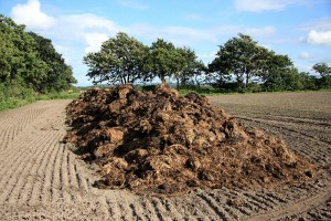 Manure piles like this one can be harmful to the lakes if allowed to sit out in heavy rainstorms. Photo taken from Wikipedia Commons