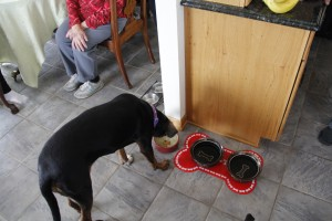 Cole Monka / Wisconsin Center for Investigative Journalism Frank Michna's dog, Sophie, refuses to drink water from the taps in his Caledonia home. Michna said the dog sniffs the tap water and then drinks instead from a bowl filled with bottled water. A study by the environmental advocacy group, Clean Wisconsin, linked pollution in Michna's and hundreds of other wells to buried coal ash from the nearby We Energies Oak Creek Power Plant.